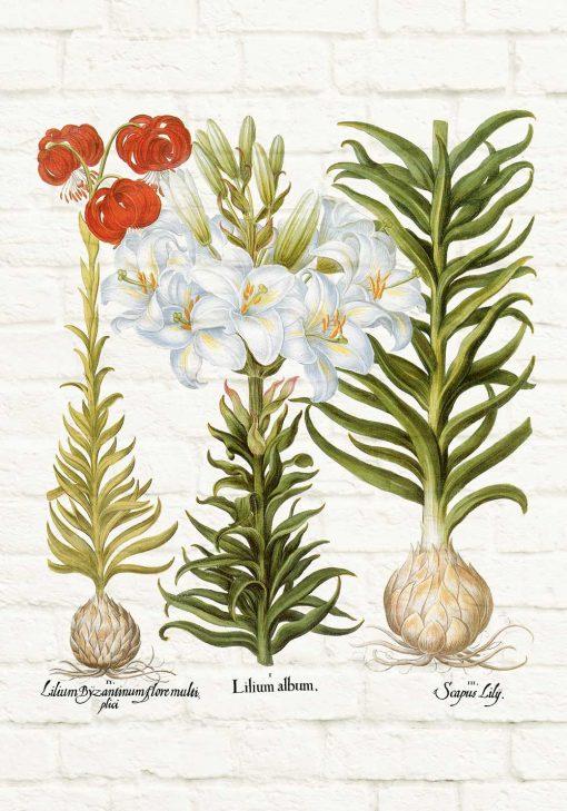 Plakat z lilią