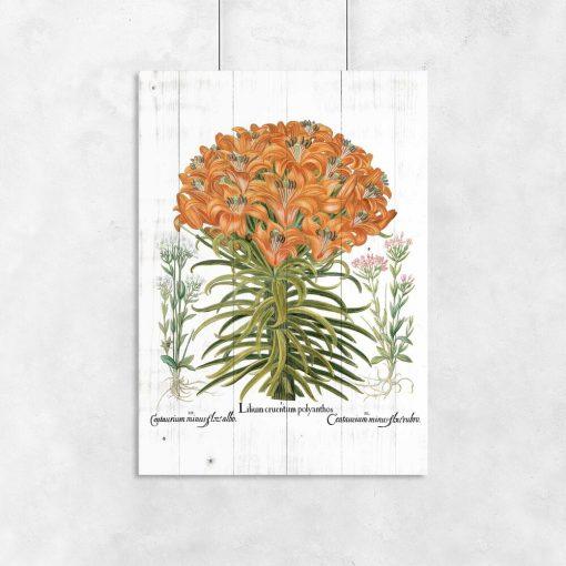 Plakat z lilią tygrysią do biura