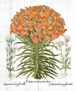 Plakat z lilia tygrysią