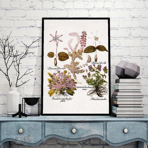 Plakat z mioduszką dla botanika do gabinetu