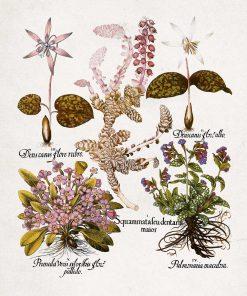Plakat z mioduszką dla botanika do jadalni