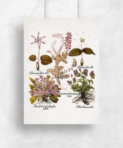 Plakat z mioduszką dla botanika do kuchni