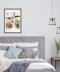 Plakat z mioduszką dla botanika do sypialni