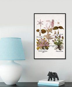 Plakat z mioduszką dla botanika na przedpokój