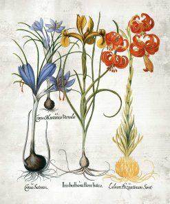 Plakat z motywem kwiatów cebulowych