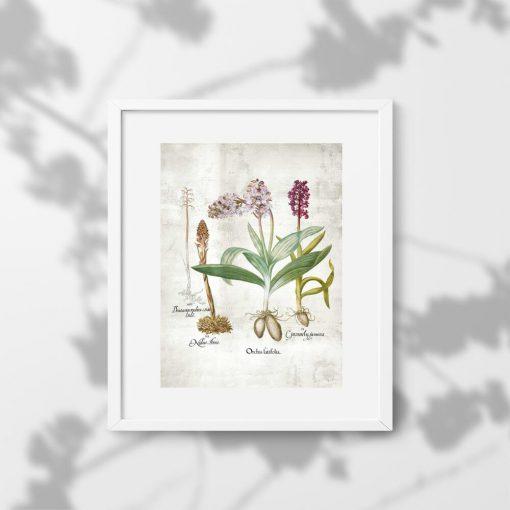 Plakat z motywem kwiatów z łąki