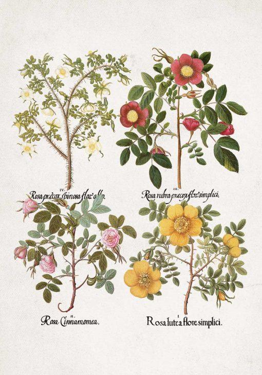 Plakat z motywem kwiatowym jako pomoc naukowa