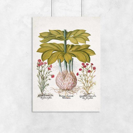 Plakat z motywem kwiatowym - lilia złotogłów
