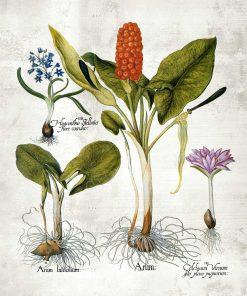 Plakat z motywem roślin wieloletnich i ich nazw