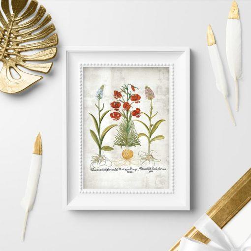 Plakat z motywem roślinnym i łacińskimi nazwami