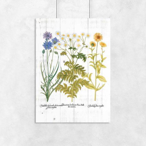 Plakat z nagietkiem i innymi ziołami