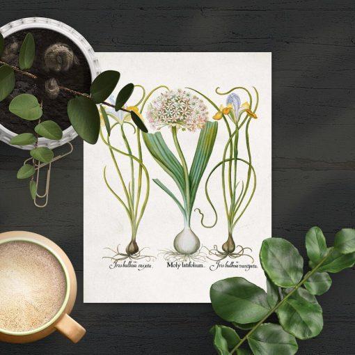 Plakat z nazwami łacińskimi kwiatów