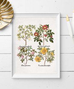 Plakat z pastelowych kolorach z różami
