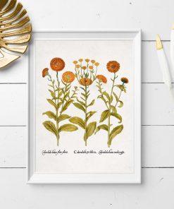 Plakat z pomarańczowymi kwiatkami jako pomoc edukacyjna