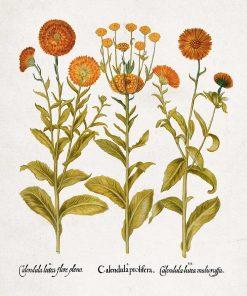 Plakat z pomarańczowymi kwiatuszkami do dekoracji szkoły