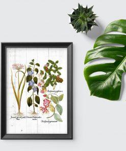Plakat z roślinami i ich korzeniami