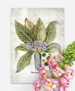 Plakat z roślinami i ich nazwami łacińskimi