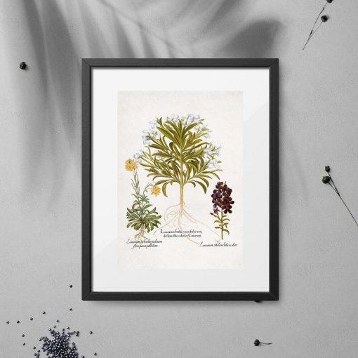 Plakat z roślinami leczniczymi i ich kwiatami