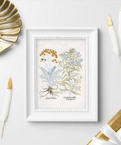 Plakat z roślinami ozdobnymi i łacińskimi nazwami