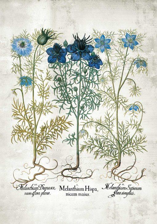 Plakat z roślinami z łąki