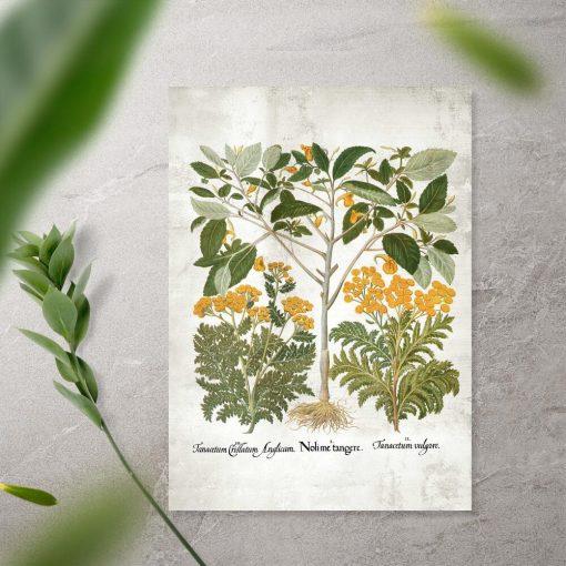 Plakat z roślinami zielarskimi