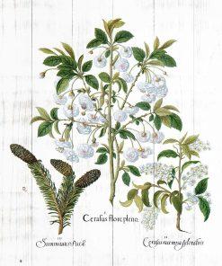 Plakat z roślinnym motywem na białych deskach do jadalni