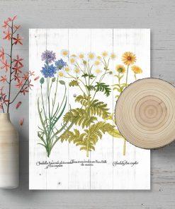 Plakat z wrotyczem i innymi ziołami