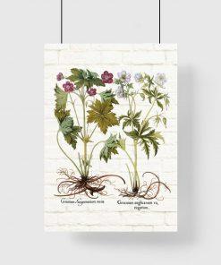 Plakat z ziołami do dekoracji sklepu ogrodniczego