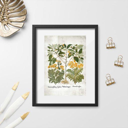 Plakat z ziołami leczniczymi