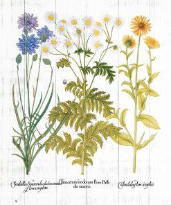 Plakat z ziołami