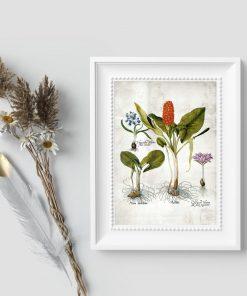 Plakaty botaniczne - pomoc naukowa do szkoły