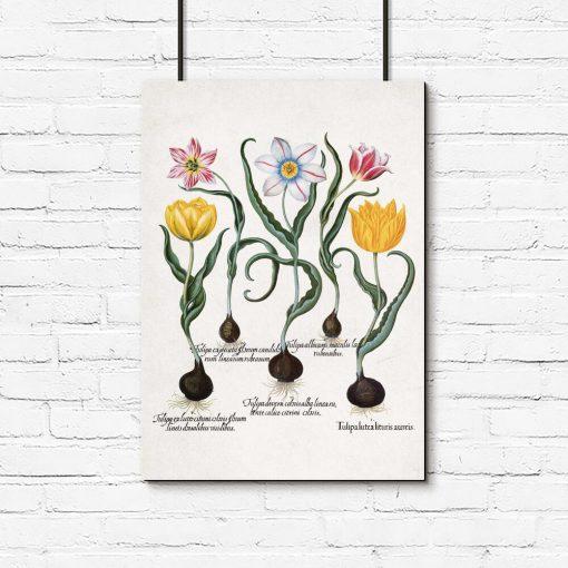 Plakaty cebule i kwiaty