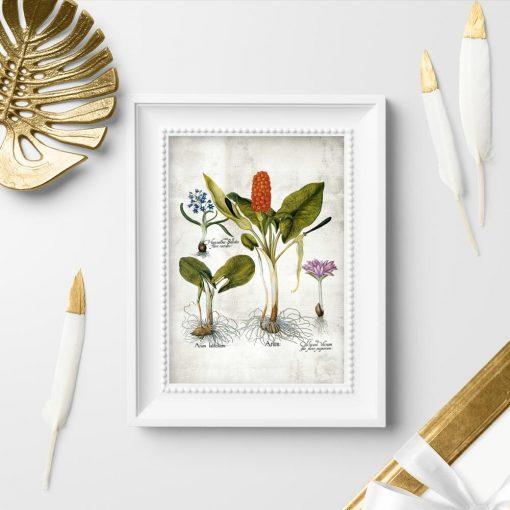 Plakaty kwiaty i kłącza - rycina naukowa