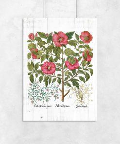 Plakaty rustykalne z ziołami
