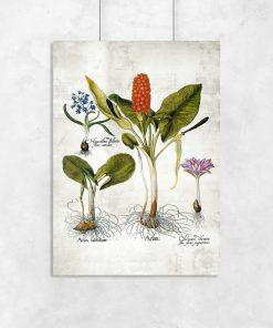 Plakaty z bylinami i ich kłączami
