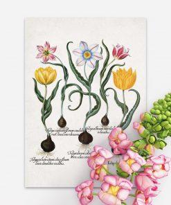 Plakaty z cebulami i kwiatami tulipanów