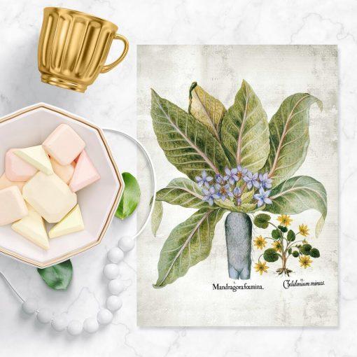 Plakaty z roślinami leczniczymi do apteki