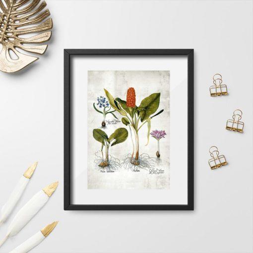 Plakaty z roślinami wieloletnimi na zielonkawym tle