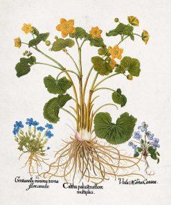 Rustykalny plakat z polnymi kwiatami do kawiarni