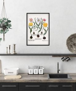 Tulipany - Plakat dla botanika do kuchni