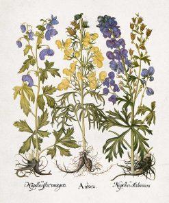 Wilcze ziele - Plakat dla florysty do jadalni