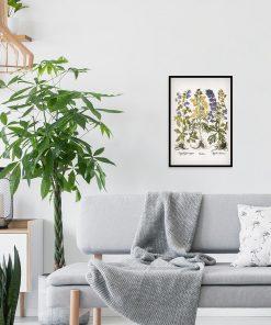 Wilcze ziele - Plakat dla florysty do salonu