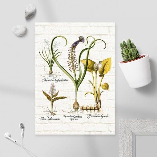 Botaniczny plakat z hiacyntem do pokoju
