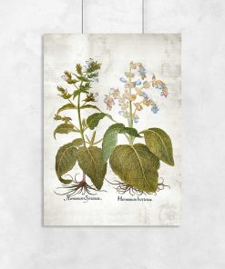 Botaniczny plakat z szałwią powabną do biura