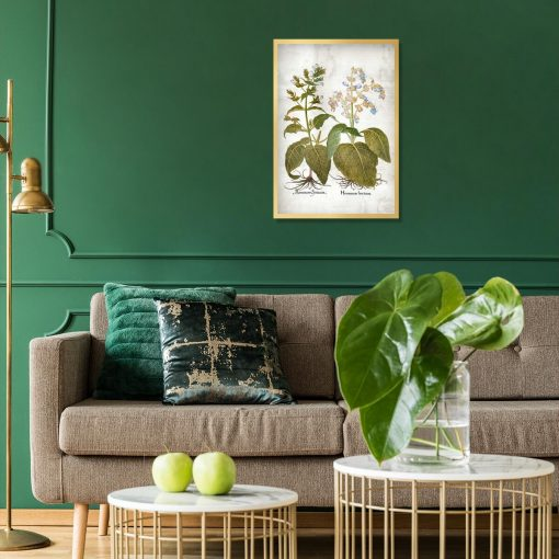 Botaniczny plakat z szałwią powabną do salonu