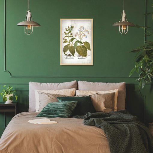 Botaniczny plakat z szałwią powabną do sypialni