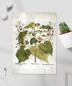 Dydaktyczny plakat z roślinami i łacińskimi nazwami