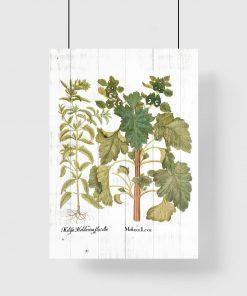 Edukacyjny plakat z roślinami i łacińskimi nazwami