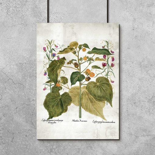 Edukacyjny plakat z roślinami