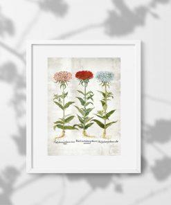 Kwiaty ogrodowe na plakacie - byliny